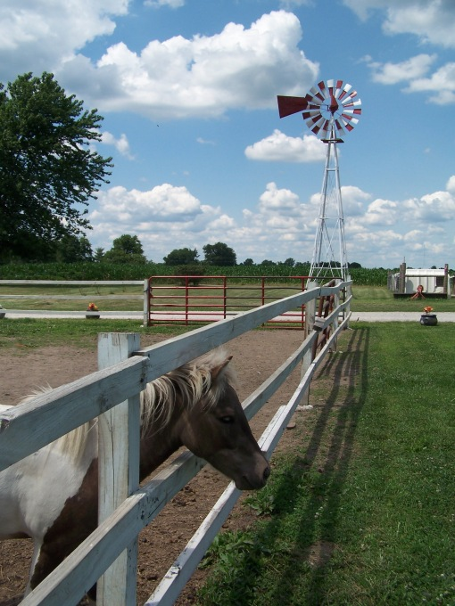 2014-07-17 Windcrest windmill and horse
