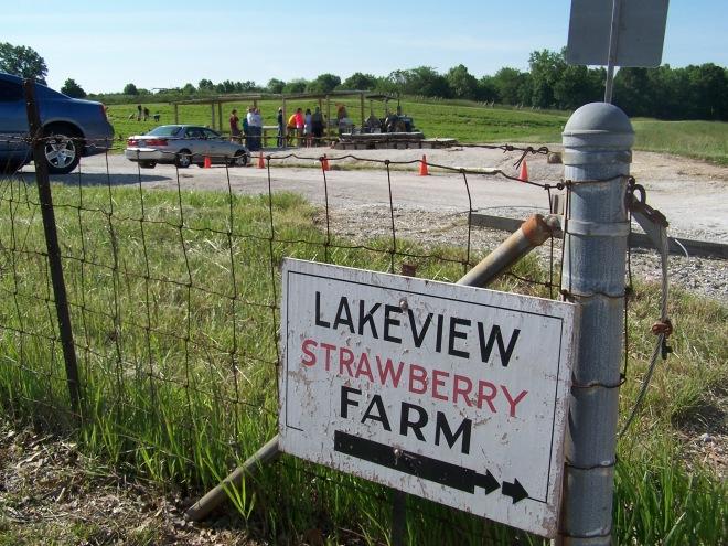 Strawberry Farm, Turn Left!