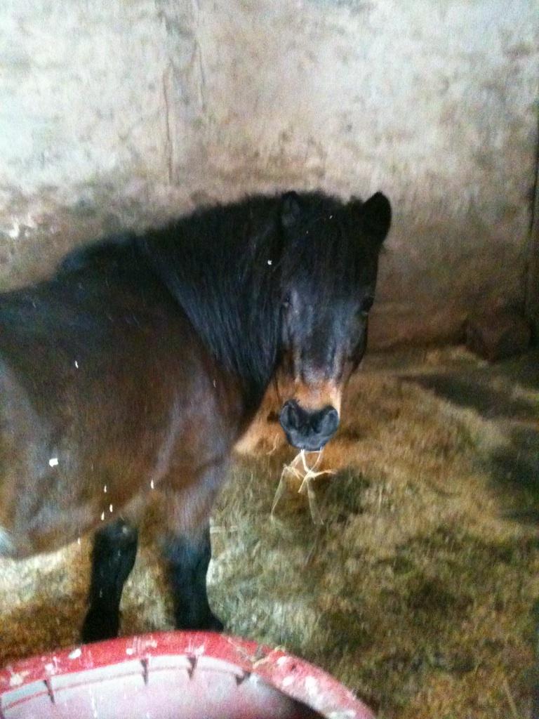 2015-02 Tower Grove pony