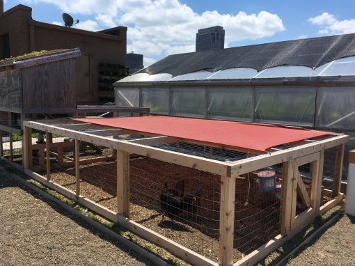 2017 Food Roof Chickens