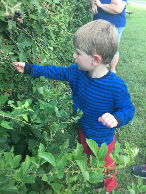 2018-07-20 Wild Blackberries